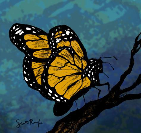 monarch-butterfly-scott-rolfe