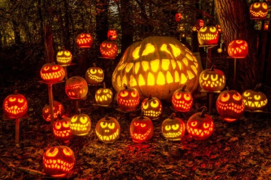 cheshire-pumpkins-x2